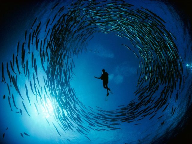 barracuda-bismarck-sea-national-geographic