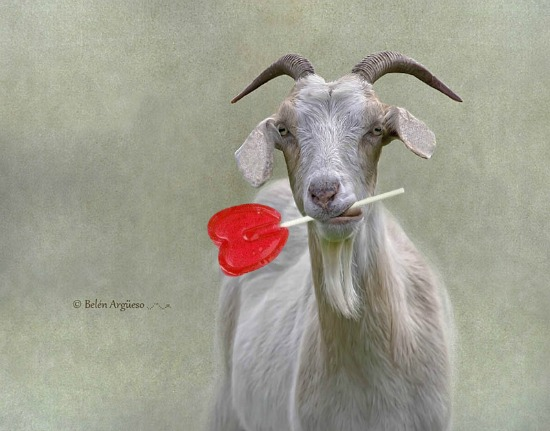 thehistoryofever_happy_valentines_day_goat